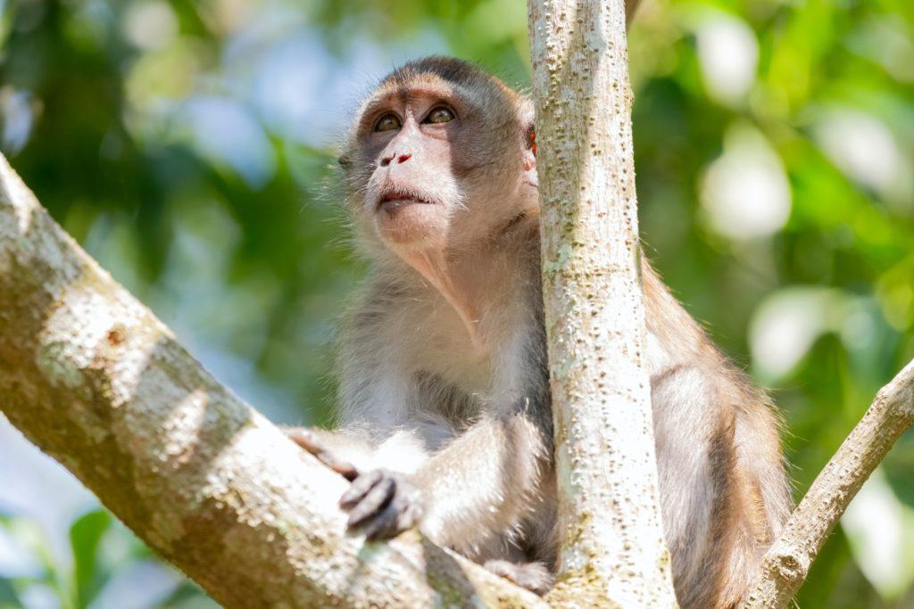 木の上にいる猿の写真